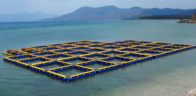 Budidaya Ikan dengan Keramba Jaring Apung